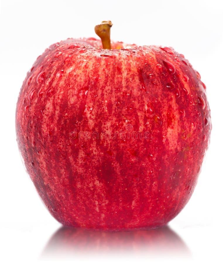 isolerad red för äpple fuji royaltyfria bilder