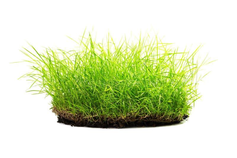 Isolerad rugge av gräs arkivbild