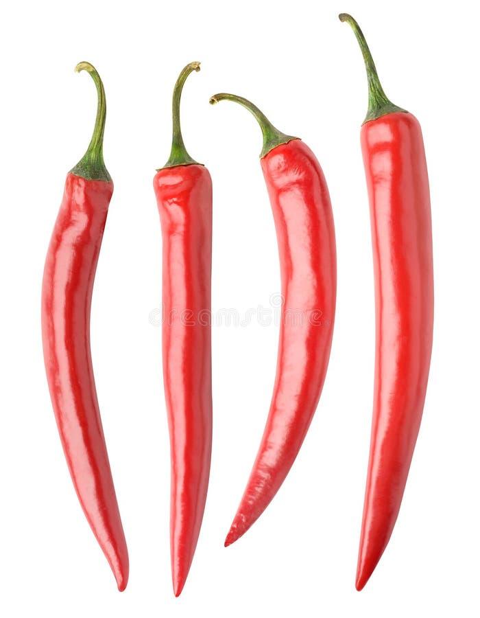 Isolerad samling för peppar för varm chili royaltyfria bilder