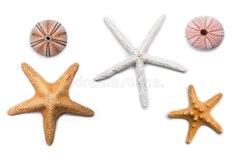 isolerad sjöstjärna arkivfoto