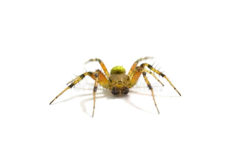 Download Isolerad spindel fotografering för bildbyråer. Bild av medf8ort - 19795955