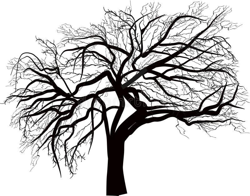 Isolerad stor kal treeillustration stock illustrationer