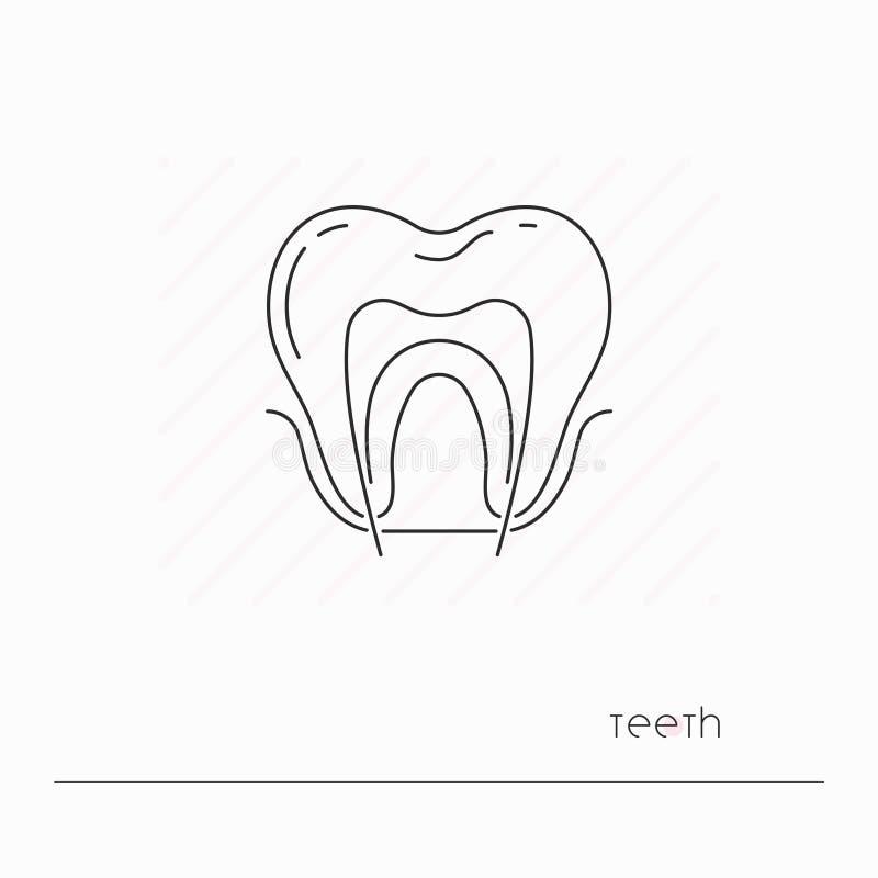 Isolerad tandsymbol Enkel thillinje symbol av tanden med nerven vektor illustrationer