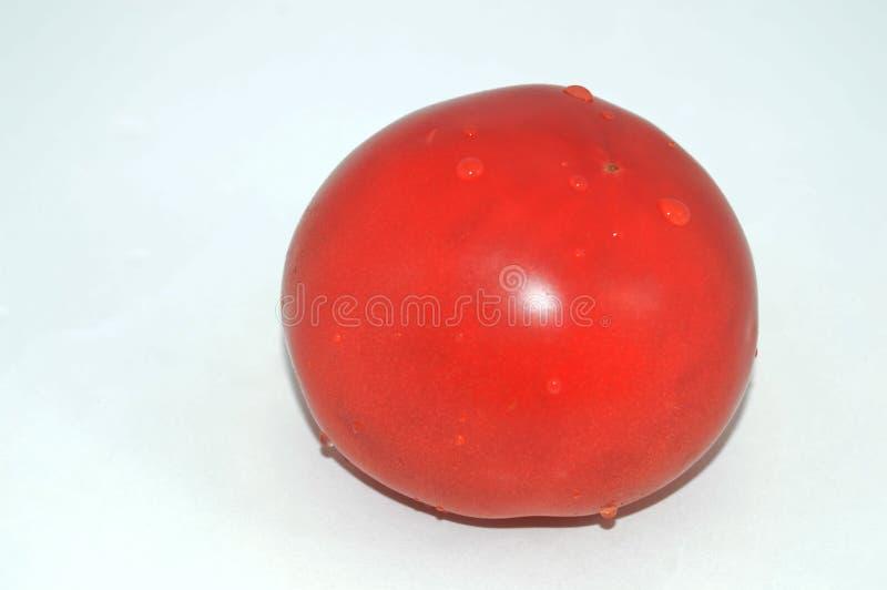 Isolerad tomat med vattendroppar fotografering för bildbyråer