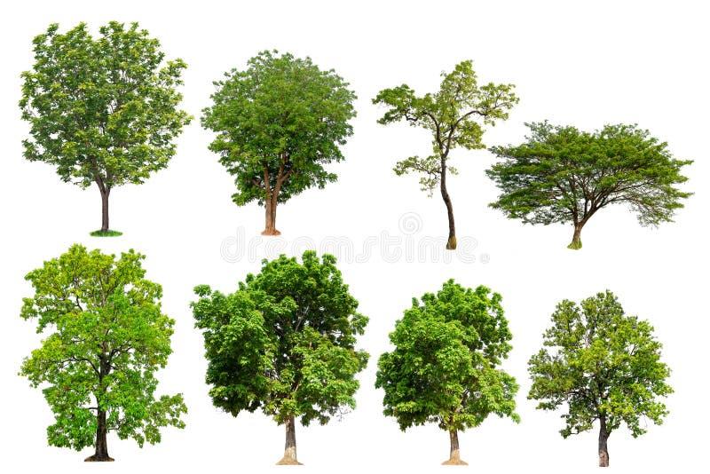 Isolerad trädsamling stock illustrationer
