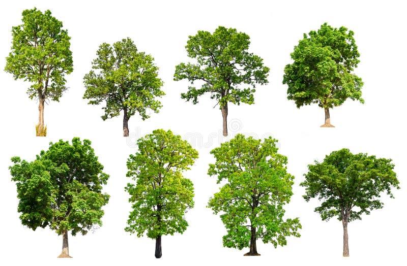 Isolerad trädsamling royaltyfri foto
