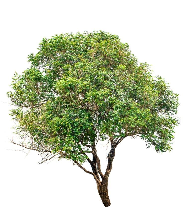 isolerad tree arkivbilder
