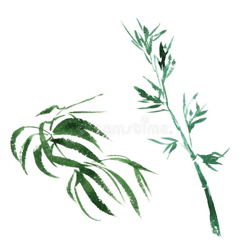 Isolerad tropisk bambu i en vattenfärgstil royaltyfri illustrationer
