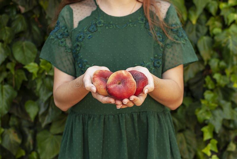 Isolerad ung kvinna som rymmer några röda plana persikor i hennes händer Prunus Persica platycarpa Kinesisk plan persika Variatio arkivbild