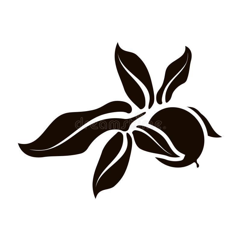 Isolerad valnötsymbol Vektorkonst l?mnar och b?r frukt vektor illustrationer