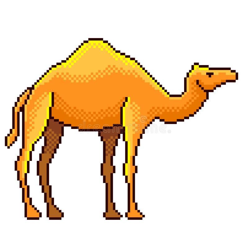 Isolerad vektor för PIXELEgypten kamel detaljerad illustration vektor illustrationer