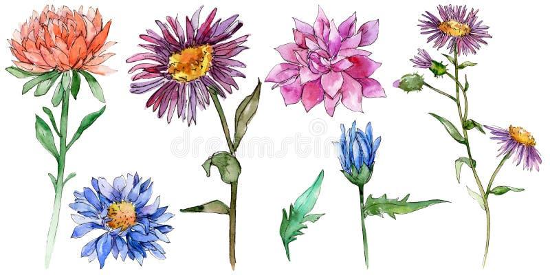 Isolerad vildblommachrysantemumblomma i en vattenfärgstil vektor illustrationer