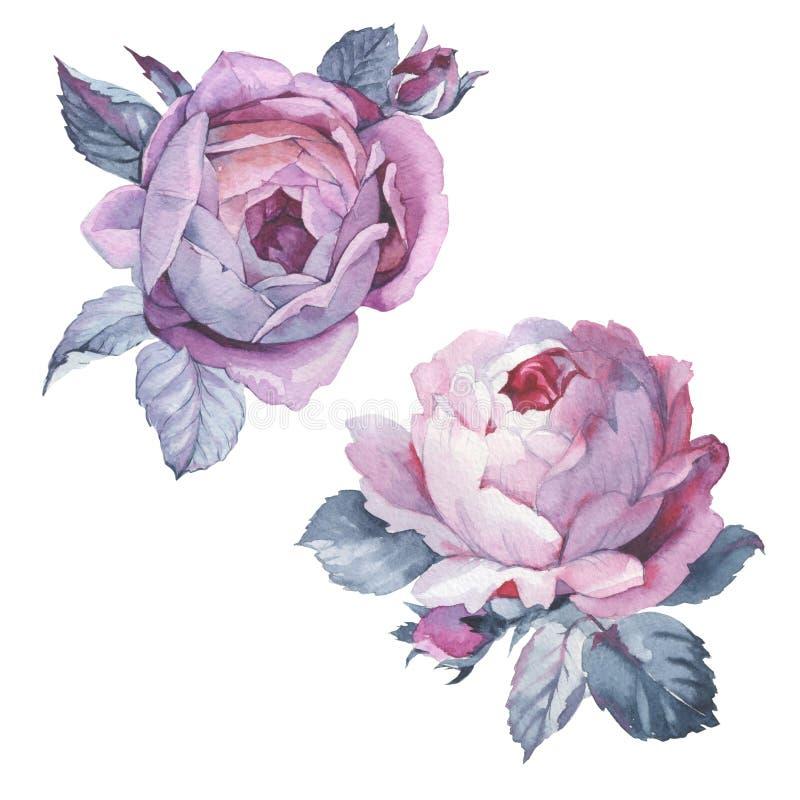 Isolerad vildblommarosblomma i en vattenfärgstil royaltyfri illustrationer