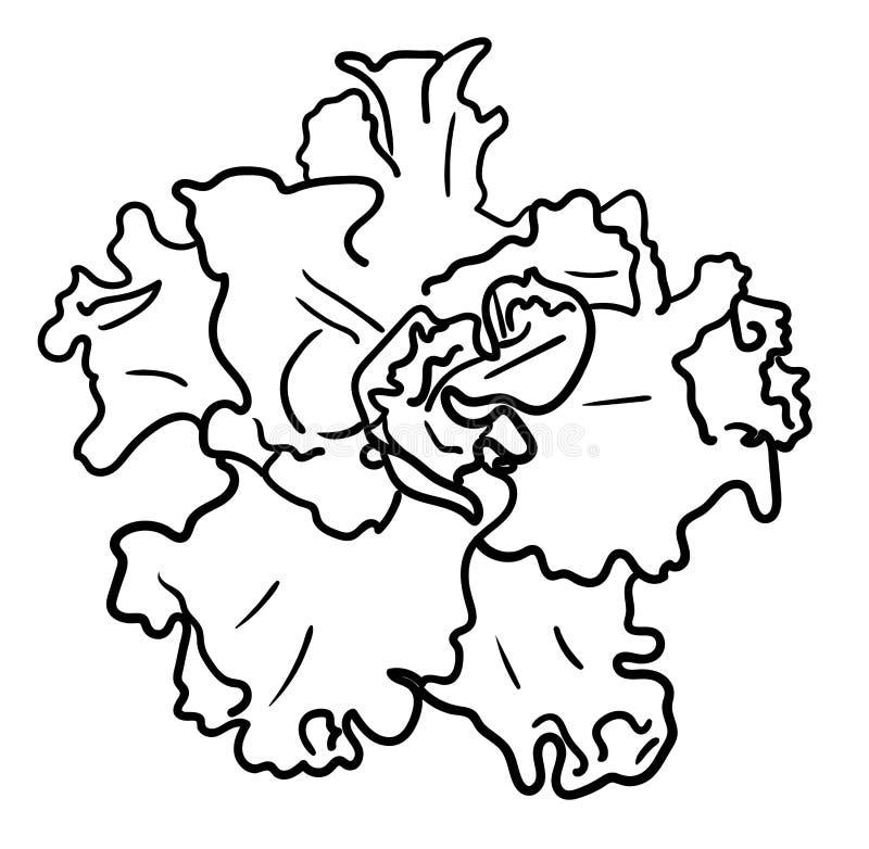 Isolerad violett blomma för sammetafrikan stock illustrationer