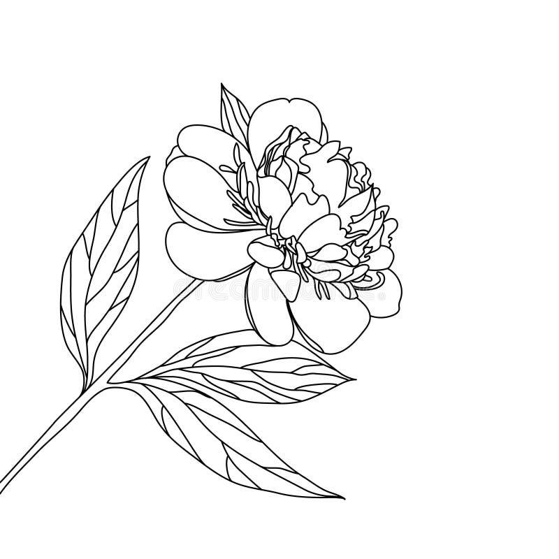 Isolerad vit för svart för vallmoblommadiagrammet skissar illustrationvektorn stock illustrationer