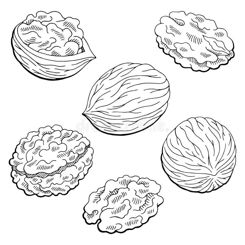 Isolerad vit för valnötdiagramsvart skissar illustrationen vektor illustrationer