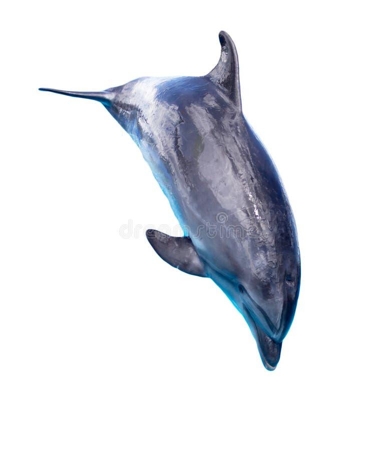 isolerad white för bakgrund delfin arkivbild