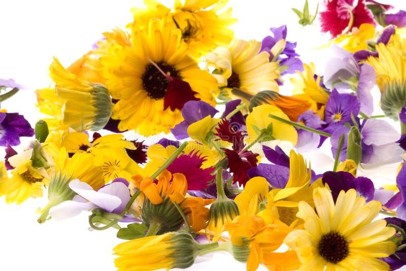 isolerade ätliga blommor arkivfoton