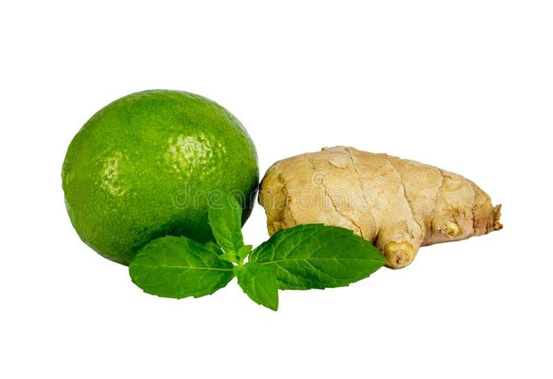 Isolerade citrusfrukter Limefrukt, citron och ingefära som isoleras på vit bakgrund royaltyfri foto