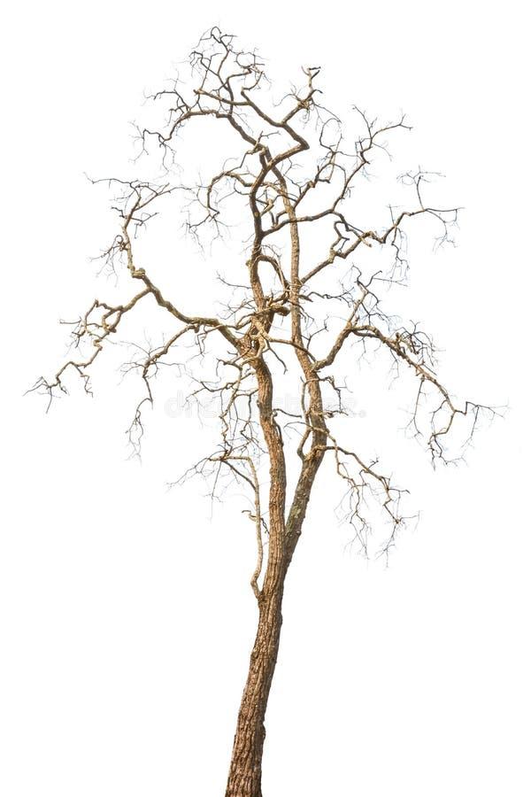 Isolerade döda träd royaltyfria foton
