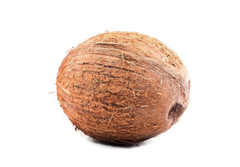Isolerade den hårda bruna kokosnöten för närbilden på en ljus vit bakgrund En hel mutter Artistiska tropiska muttrar Organiska fo arkivfoton