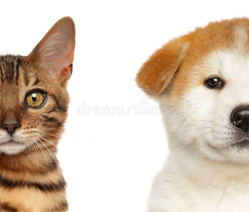 Isolerade den halva framsidan för kattungen och för valpen, vitt royaltyfria foton