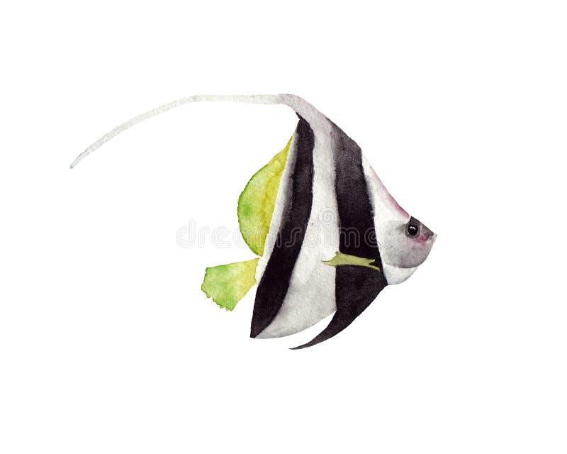 Isolerade den utdragna vattenfärgillustrationen för handen av den svartvita ljusa tropiska fisken royaltyfri illustrationer