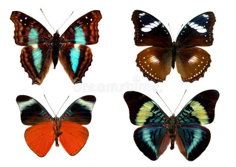 isolerade fjärilar arkivfoto
