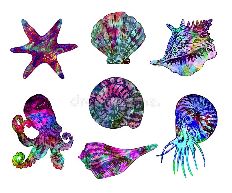 Isolerade illustrationen för snäckskal, för havsstjärnan, för bläckfisken och för nautilusen målade samlingen, hand abstrakta vat royaltyfri fotografi