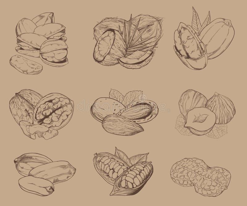 Isolerade inristade muttrar Uppsättning av blandade muttrar vektor illustrationer