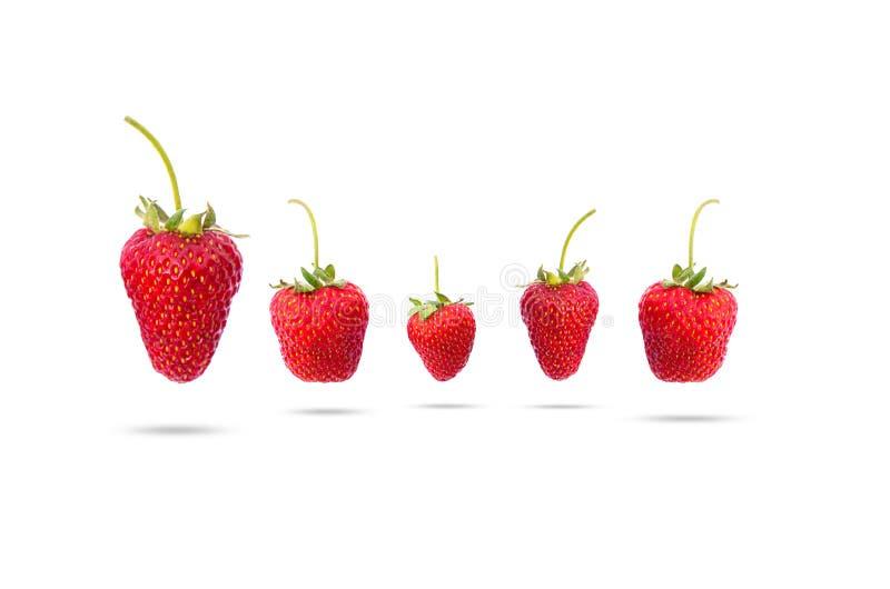 isolerade jordgubbar tre fotografering för bildbyråer