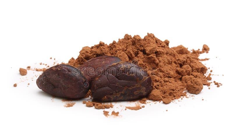 Isolerade kakaobönor och pulver fotografering för bildbyråer