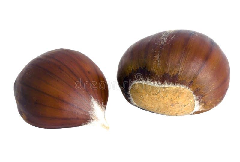 isolerade kastanjebruna frukter för castanea den sativa sötsaken arkivfoto