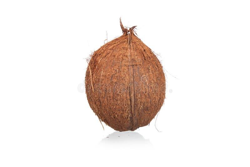 isolerade kokosnötter royaltyfri bild
