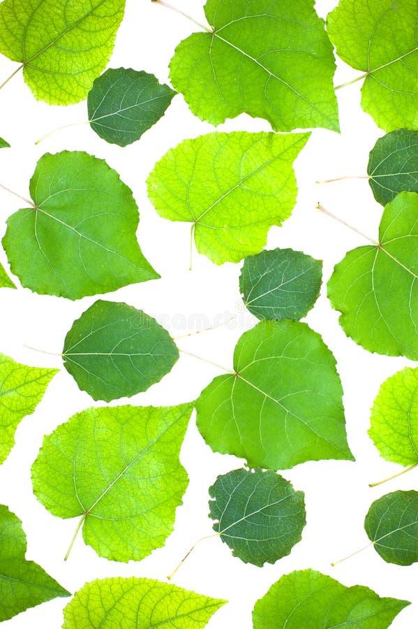 isolerade leaves royaltyfri foto