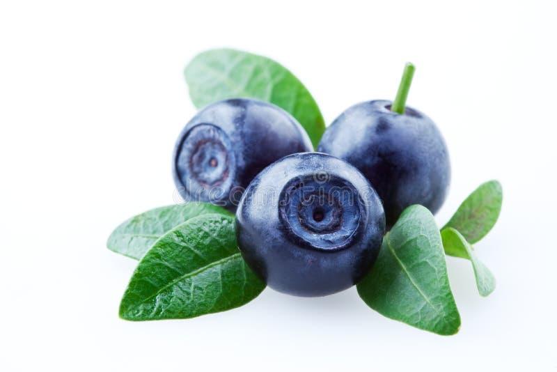 isolerade leaves för blåbär blåbär royaltyfri foto