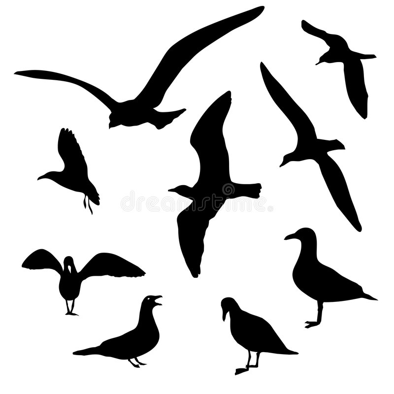isolerade seagulls royaltyfri illustrationer