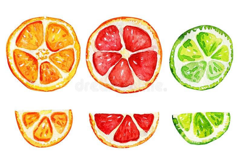 Isolerade skivor av apelsinen, grapefrukten och limefrukt vektor illustrationer