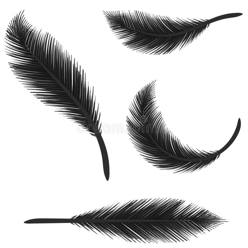isolerade svarta fjädrar vektor illustrationer