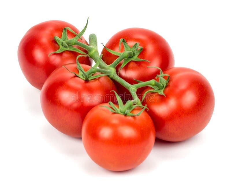 isolerade tomater royaltyfri fotografi