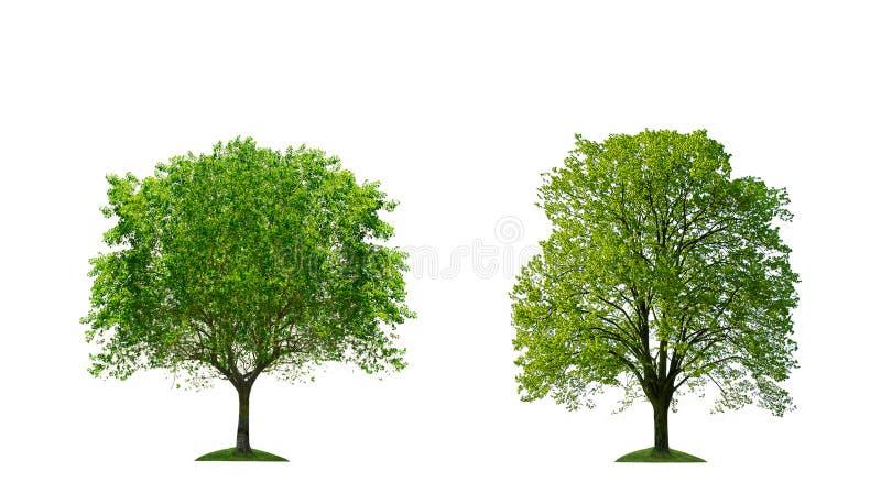 isolerade trees royaltyfri illustrationer