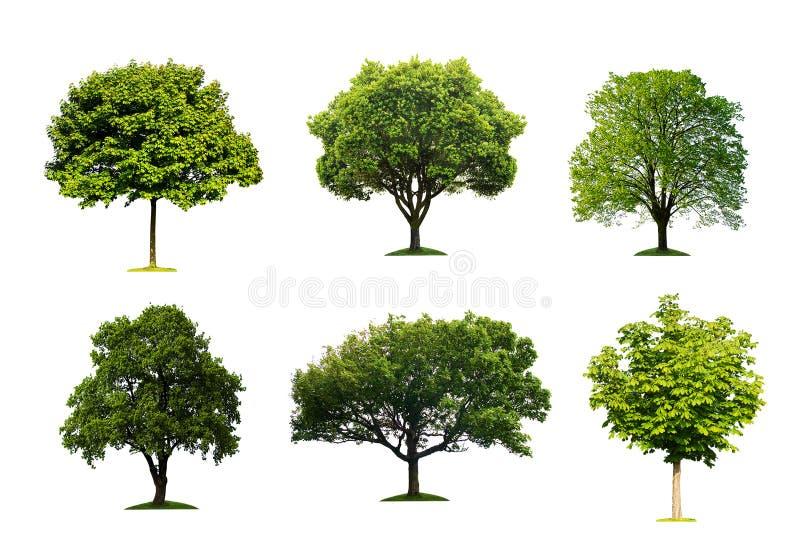 isolerade trees arkivbilder
