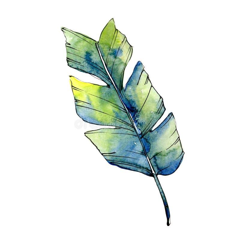 Isolerade tropiska gröna lesves i en vattenfärgstil vektor illustrationer