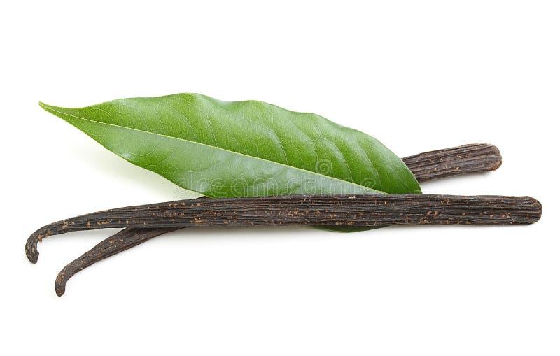 Isolerade vaniljfröskidor arkivbild