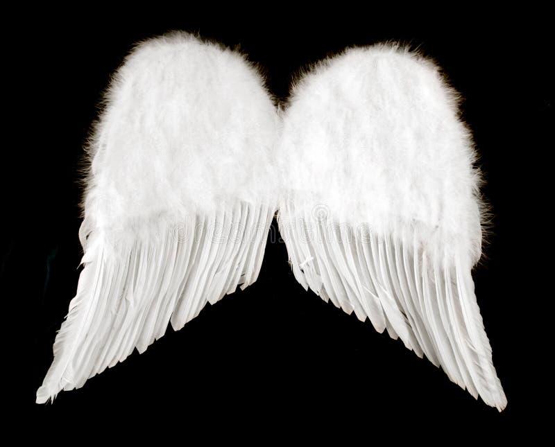isolerade vingar för ängel black royaltyfria foton