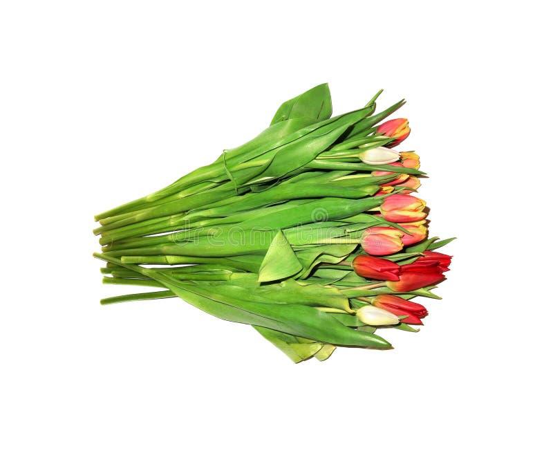 Isoleras den stora buketten för färgrika tulpan av lögner på en vit bakgrund royaltyfri foto