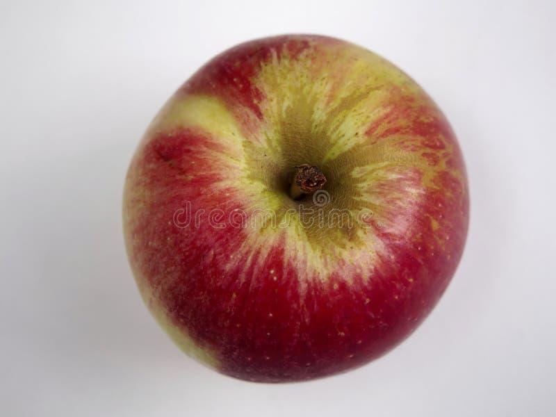 Isolerat Akane äpple royaltyfri bild