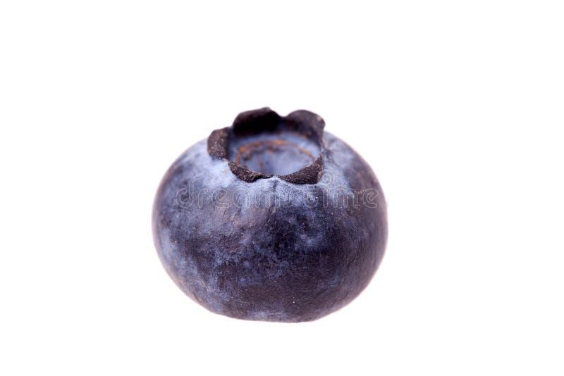 isolerat blåbär royaltyfri bild