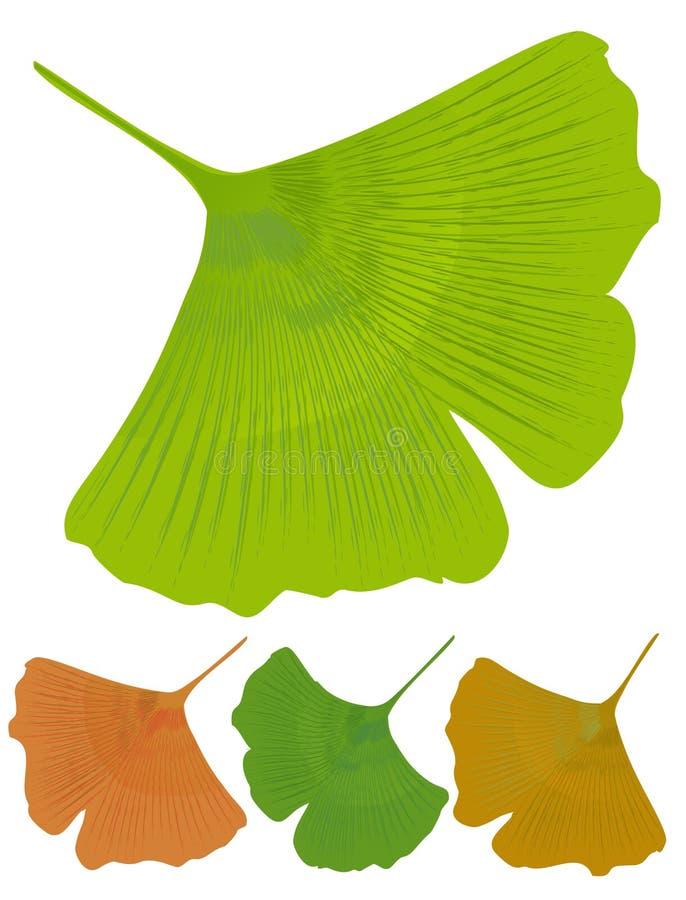 Isolerat blad av ginkgobilobaen, medicinskt träd med anti--oxidant effekt Trädfärgvarianter - göra grön, gulna, apelsinen royaltyfri illustrationer