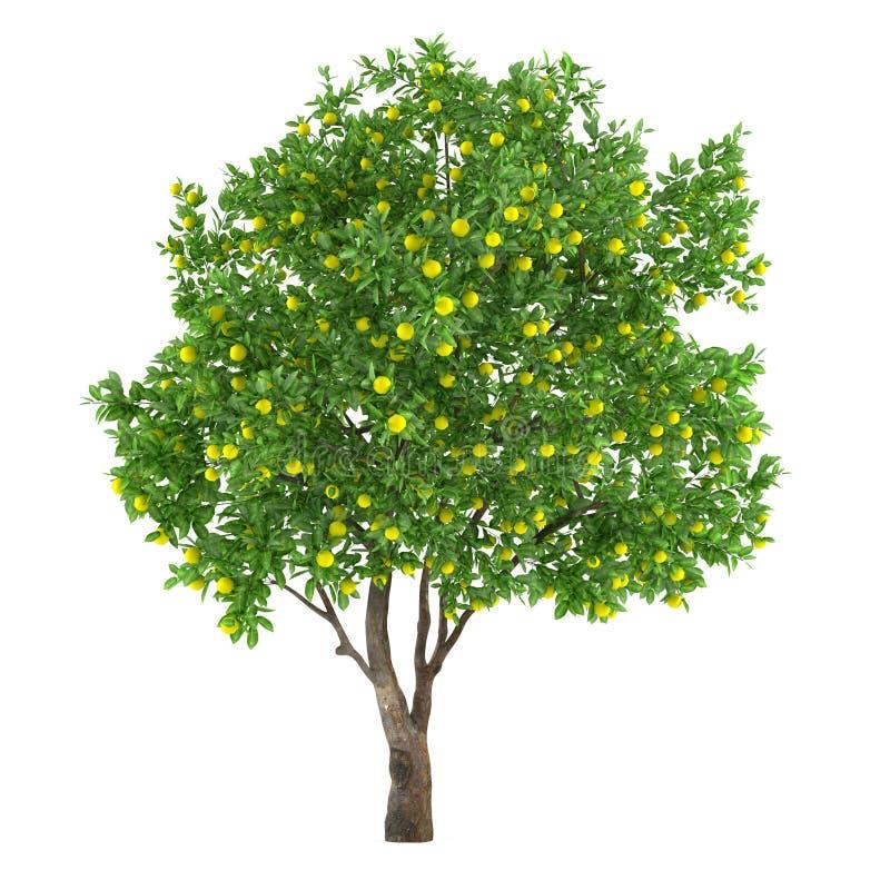 Isolerat citrusfruktträd. citron royaltyfri illustrationer